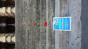 Manifestazione Fiori Rossi